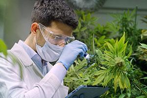 Cannabis industry benefits